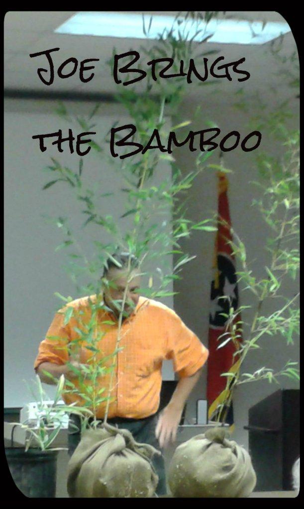 Bamboo 2 2015