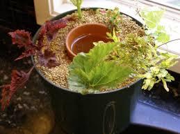forsythe pot