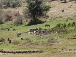 DSC03419 Masai Mara National Reserve